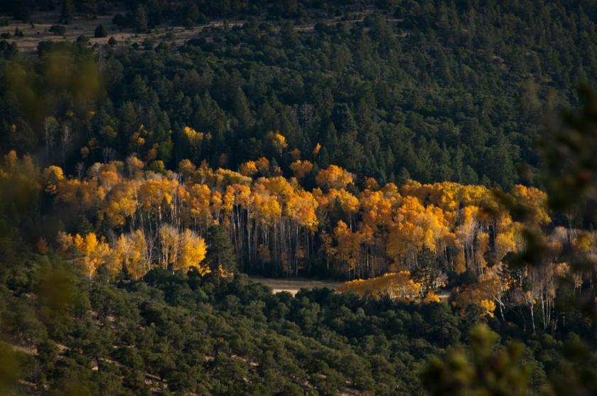 DavisA_Colorado-25