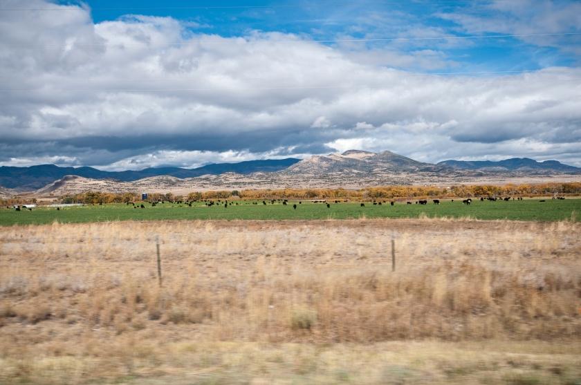 DavisA_Colorado-41