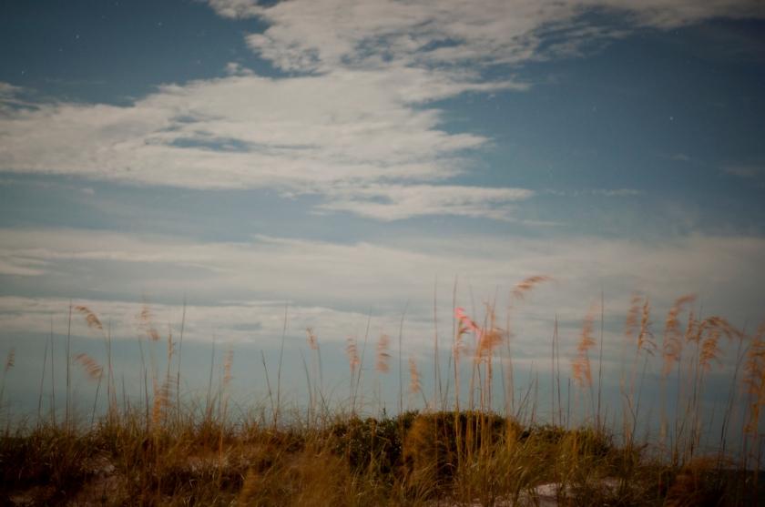 DavisA_FL_Landscapes-12