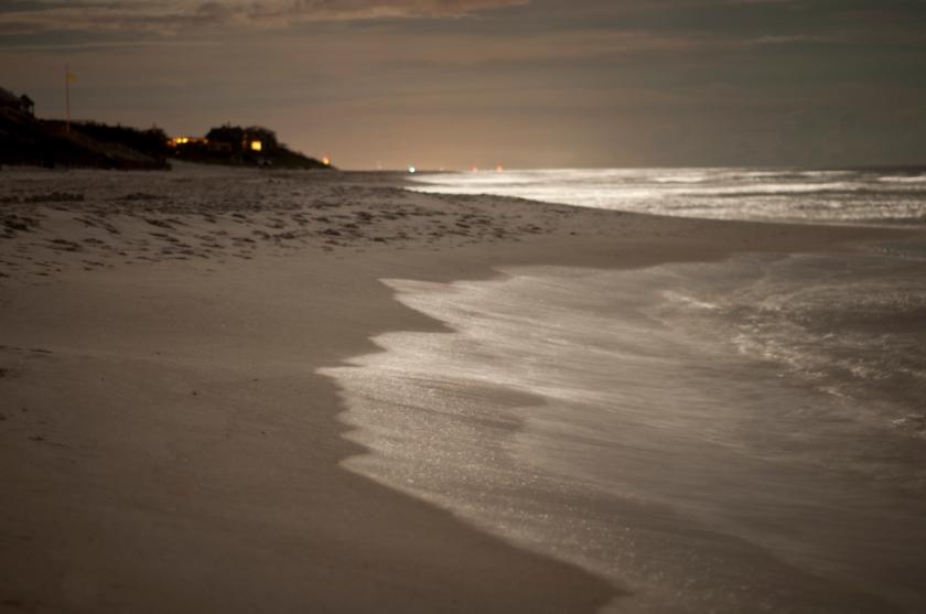 DavisA_FL_Landscapes-8