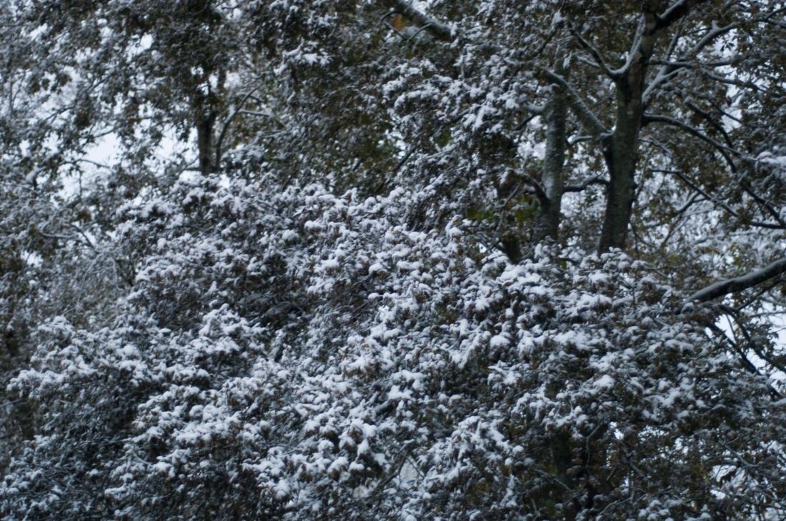 Snow Day_2017-2